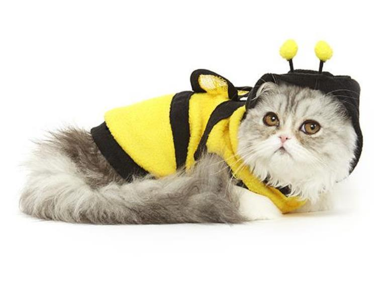 لباس گربه